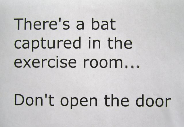 There's a Bat in the Exercise Room!