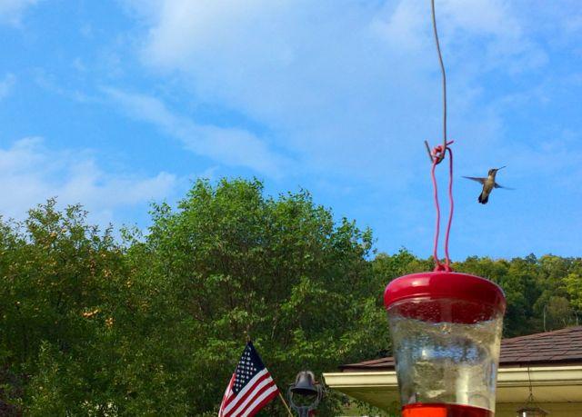 HummingbirdSky