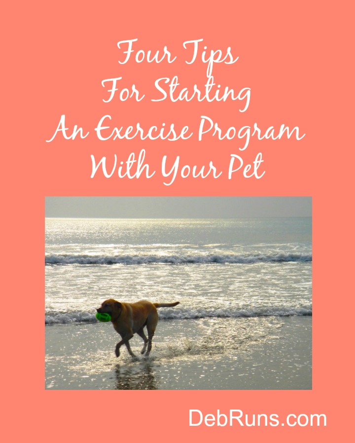 Four Tips For Starting An Exercise Program With Your Pet